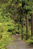 Escaliers à la terre Photographie stock libre de droits