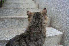 Escaliers au ciel ? Photographie stock libre de droits