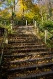 Escaliers avec des étapes ensoleillées des pavés ronds dans la forêt en automne Photos stock