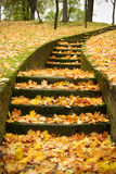 Escaliers avec des lames d'automne Images stock