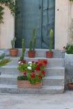 Escaliers avec des pots de fleur image stock