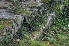 Escaliers avec l'herbe Images stock