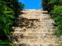 Escaliers avec la végétation au Cuba Image stock