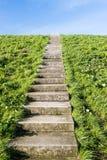 Escaliers concrets entre l'herbe Photos stock
