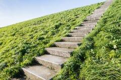 Escaliers concrets entre l'herbe Photographie stock libre de droits