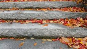 Escaliers d'automne Images libres de droits