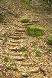 Escaliers dans la forêt Photographie stock libre de droits