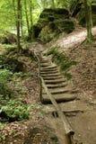 Escaliers dans la forêt image stock