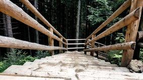 Escaliers dans la forêt Images stock