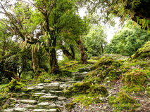 Escaliers dans la vieille forêt Images stock