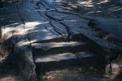 Escaliers dans le bois sous la nuance Photographie stock libre de droits