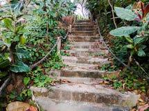 Escaliers dans naturel Images libres de droits