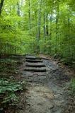 Escaliers de forêt image libre de droits