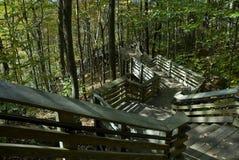 Escaliers de forêt Photos libres de droits