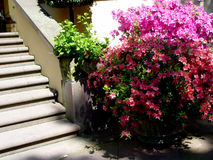 escaliers de jardin Photographie stock