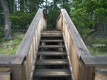 Escaliers de journal de forêt Photo libre de droits