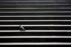 Escaliers de ville avec un pigeon Photographie stock libre de droits