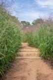 Escaliers de voie avec l'herbe grande Photographie stock libre de droits
