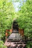 Escaliers en bois en parc images libres de droits