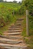 Escaliers en bois entre les fougères vertes Photos libres de droits