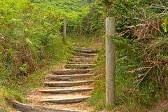 Escaliers en bois entre les fougères vertes Photographie stock
