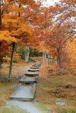 Escaliers en bois menant un dans les montagnes, couleur d'automne tout autour de elles Image stock