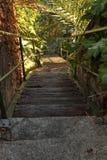 Escaliers en bois par la verdure Image libre de droits