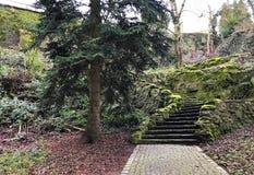 Escaliers en parc d'automne images libres de droits
