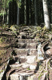 Escaliers en pierre dans la forêt Photographie stock