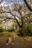 Escaliers en pierre dans un jardin du sud Photo stock