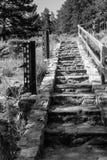 Escaliers en pierre de forêt photographie stock