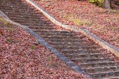 Escaliers en pierre en parc d'automne Photos stock