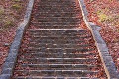 Escaliers en pierre en parc d'automne Photographie stock