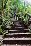 Escaliers en pierre jusqu'à la montagne par la jungle Photographie stock libre de droits