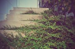 Escaliers entourés par la verdure Photo libre de droits