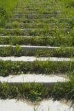 Escaliers envahis avec l'herbe Images libres de droits