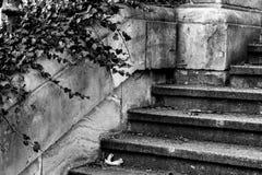 Escaliers noirs et blancs, lierre et un vieux mur en pierre Photographie stock