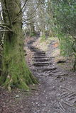 Escaliers rampants image stock