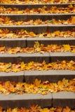 Escaliers remplis de feuilles d'automne Photographie stock libre de droits
