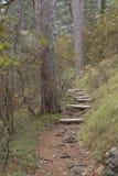 Escaliers sur la traînée dans la forêt Images stock