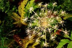 Escama floral imagenes de archivo