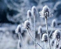 Escamas de la nieve que caen Fotografía de archivo