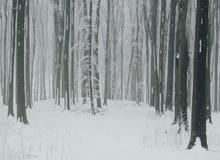 Escamas de la nieve que caen en bosque frío del invierno Fotos de archivo libres de regalías