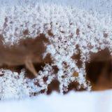 Escamas de la nieve y del hielo Imágenes de archivo libres de regalías