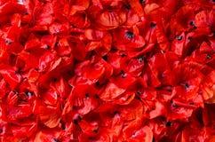 Escamas de las amapolas rojas - fondo, textura Fotos de archivo