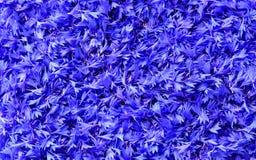 Escamas de los acianos azules fondo, textura Fotografía de archivo