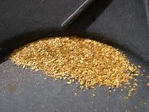 Escamas del oro Imagen de archivo libre de regalías