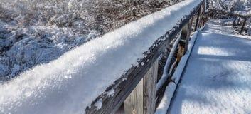 Escamas heladas - escamas de la nieve cubiertas en cristales grandes de la helada fotografía de archivo