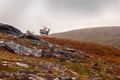 escandinavia Fotos de archivo libres de regalías