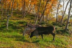 escandinavia Foto de archivo
